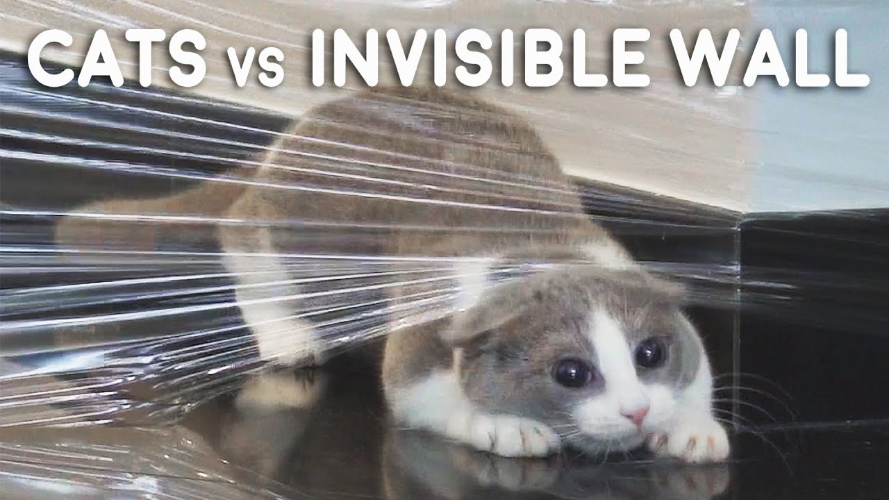Cats vs Invisible Wall Compilation