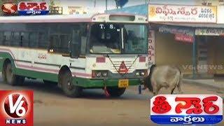 Bull Fight With Bus At Wanaparthy | Teenmaar News | V6 News