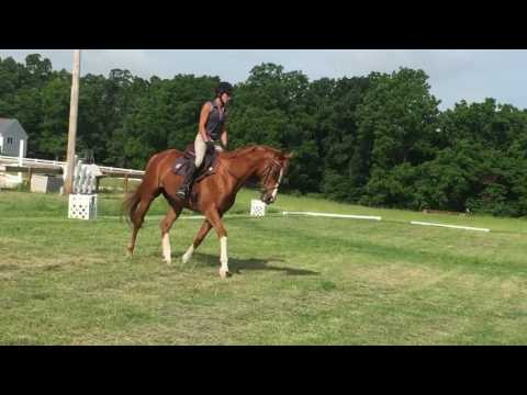 Versailles Flat walk & trot canter to left