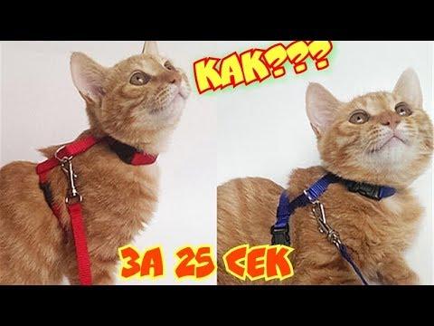 Как одеть шлейку на кошку/объясню за 25 секунд без воды