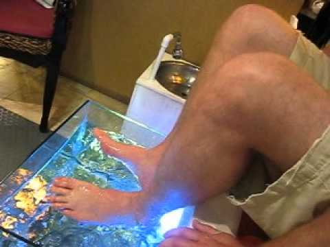 Fish spa freak out!