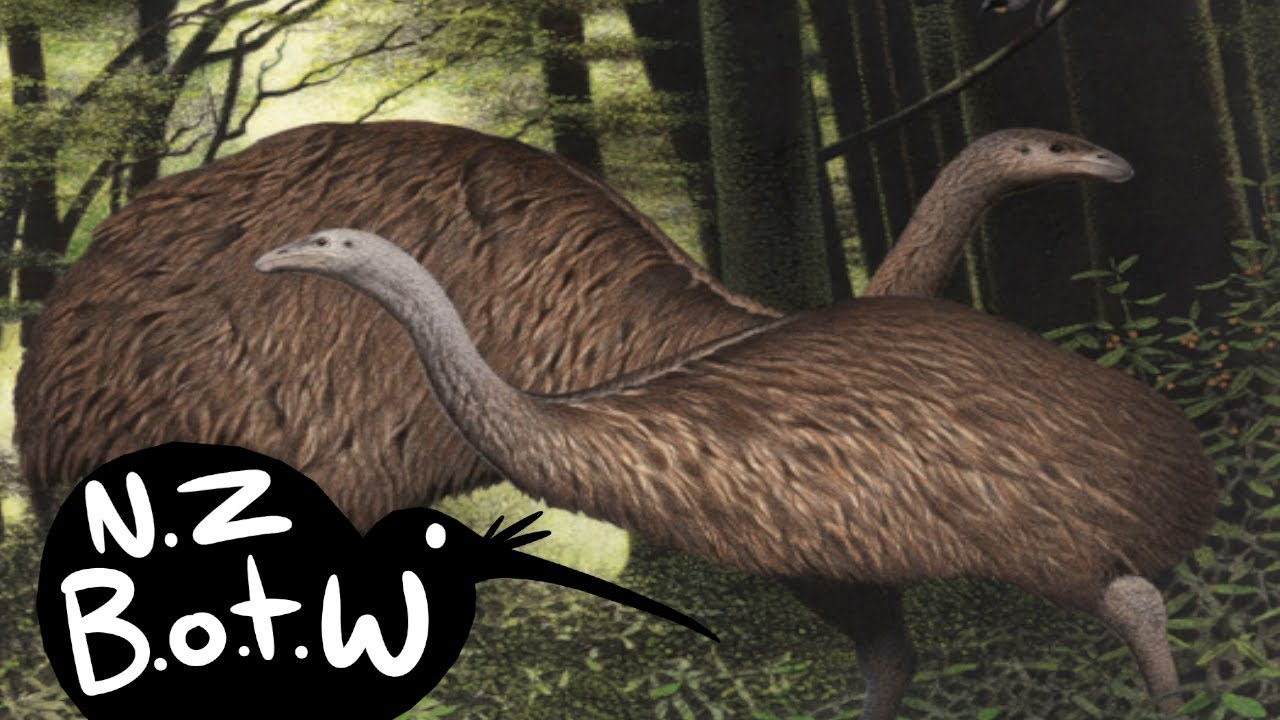 Download Moa - New Zealand Bird of the Week