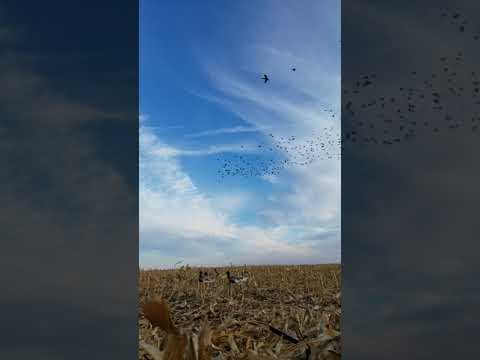 South Dakota duck hunting 2017
