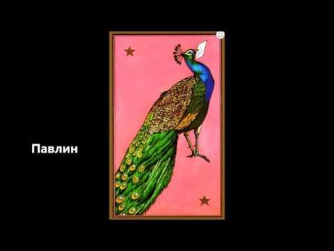 Павлин, Персидская колода Таро мадам Индиры