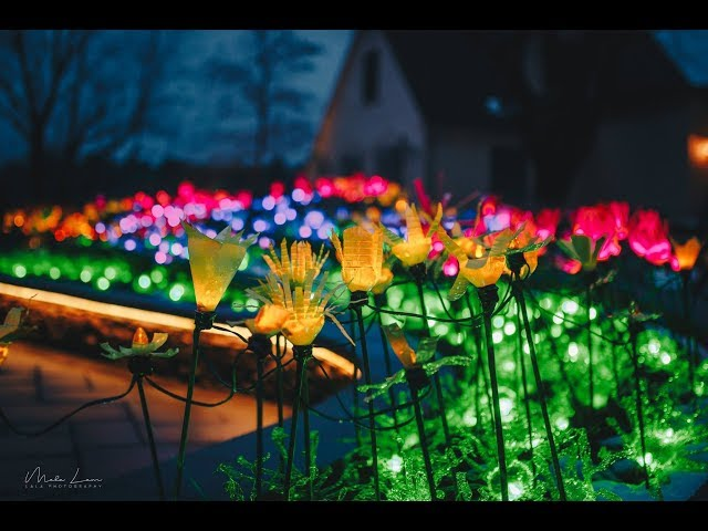 DIY: How to make recycled flower lights in 5 easy steps