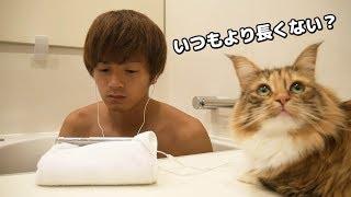 猫がずっと付いてくるので風呂に居座ってみた結果