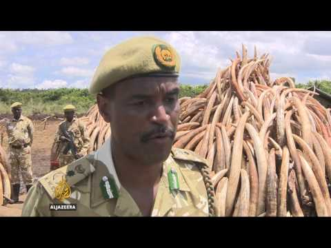 Elephant conservation: Kenya summit on poaching crisis
