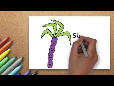 The Best Drawing Lesson How To Draw A Sugarcane Drawing