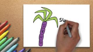 The Best Drawing Lesson | How to Draw a Sugarcane Drawing | Massive Kidszone