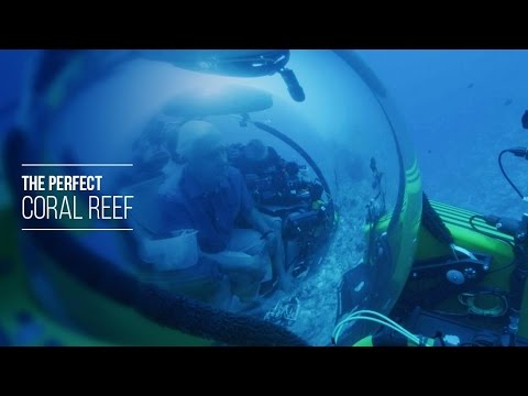 The Perfect Coral Reef - David Attenborough