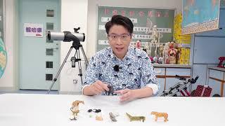 Publication Date: 2021-08-07 | Video Title: 聖公會將軍澳基德小學STEM節目:森林走廊 x STEM S