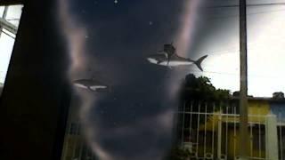 Tiburón tornado streaming