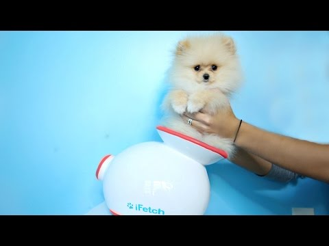 Thumbnail: Testing Out Weird Dog Gadgets With NEW PUPPY!