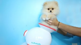 Testing Out Weird Dog Gadgets With NEW PUPPY! thumbnail