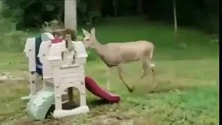 Deer music video Funny - Short Clip !