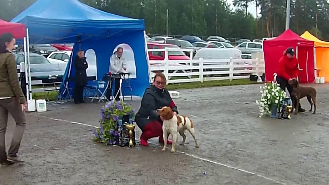 Koiranäyttely Oulu