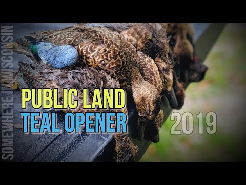 Teal Opener 2019! Duck Hunting PUBLIC LAND!