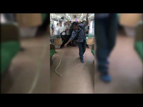 Mata a una serpiente que se había colado en su tren