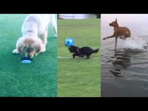 Perros y gatos bailando, graciosos y tiernos