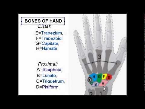 Carpal Bones Wrist Bones Youtube