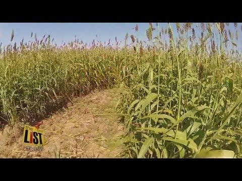The thrill of corn mazes