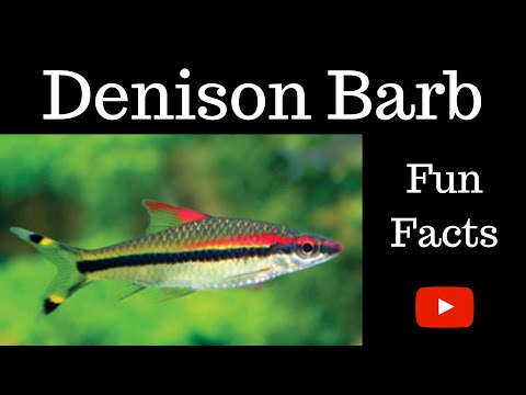 Denison Barb Fun Facts