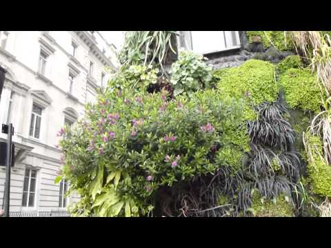 A Vertical Garden near London Green Park