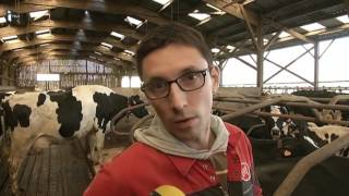 Des matelas à eau spécialement créés pour les vaches