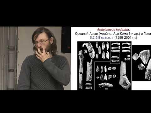 Станислав Дробышевский.  Мини курс Антропология - 4