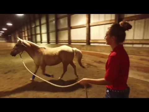 Great Oaks Equine Science 2018