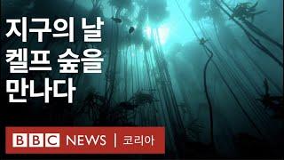 지구의 날: 켈프 숲이 이토록 중요한 이유 - BBC …