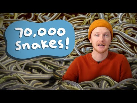 Why Did 70,000 Snakes Appear In Canada?