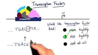 09 s Transcription Factors