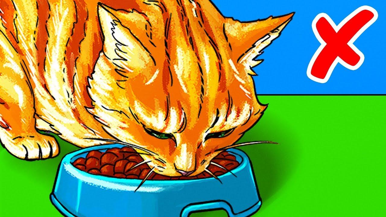 Gli errori che commettiamo nell'alimentare un animale domestico