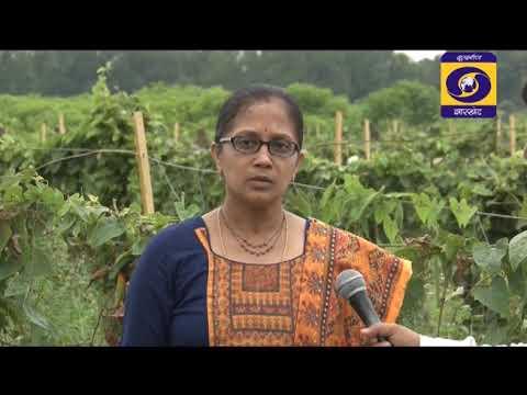 कृषि दर्शन राँची  07th अक्टूबर  2019