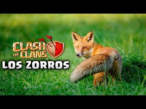 LOS ZORROS - AnikiloEnTuClan #105 - GUERRA En CLASH OF CLANS