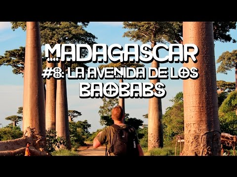 La Avenida de los Baobabs. Madagascar (8/15)