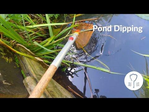 Pond Dipping At Rippledown