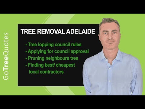 Tree Removal Adelaide - Rules, Cost and Saving Money