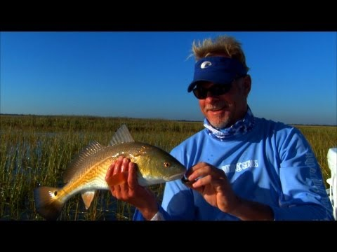 Sight Fishing For Georgia Redfish In The Flood Grass With 1 DOA Lure
