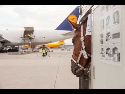 A flying stable: 65 horses on their way to Tehran