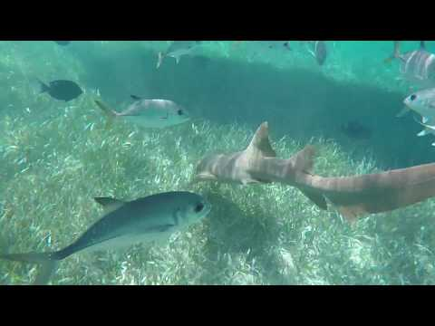 My Trip to San Pedro Belize 2018