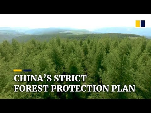 China Is Banning All Commercial Logging In Designated Forests