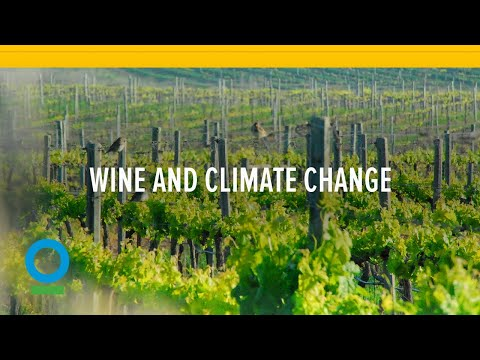 wine article Wine And Climate Change