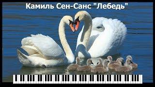 """Камиль Сен-Санс """"Лебедь"""" (Карнавал Животных)/ Sen-Sans - The Swan From """"The Carnival of the Animals"""""""