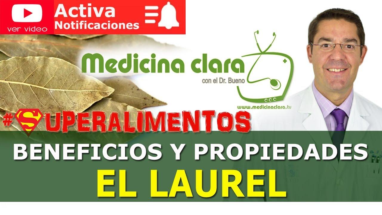 Laurel, beneficios y propiedades. ¿por qué se dice dormise en los laureles ? | Medicina Clara