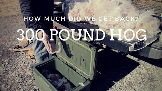 How Much Meat Do You Get From a 300 Pound HOG??