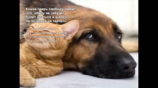 Стихи Черкашин Дмитрий - Про кошку
