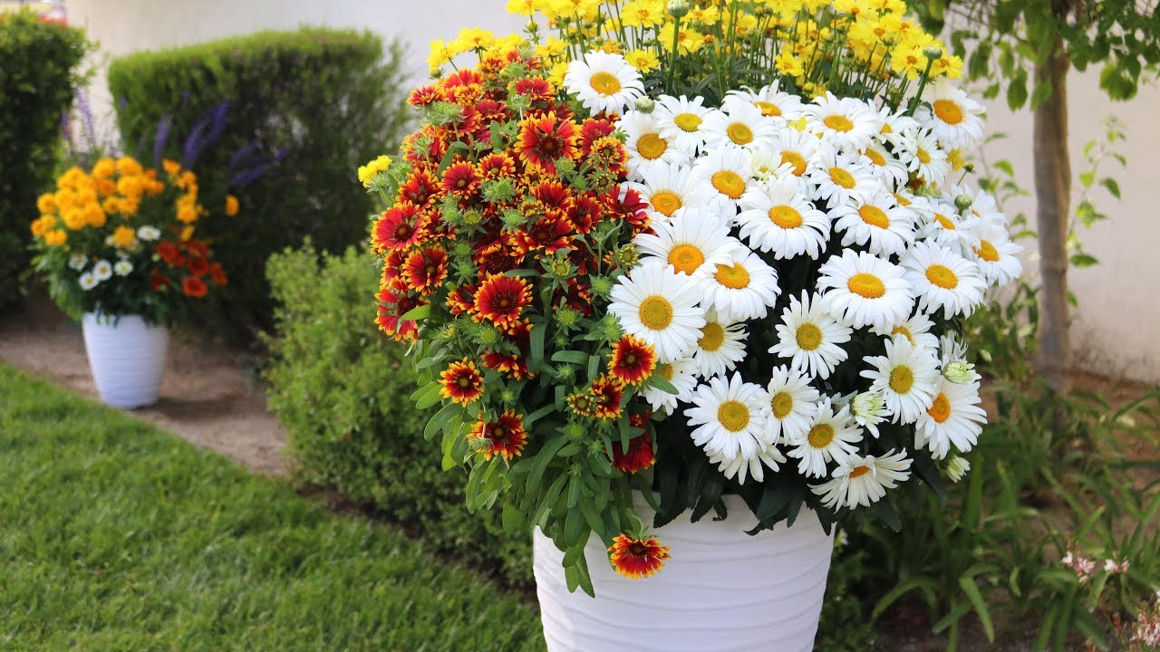 Mix Match Perennial Combinations From Dmmen Orange Youtube