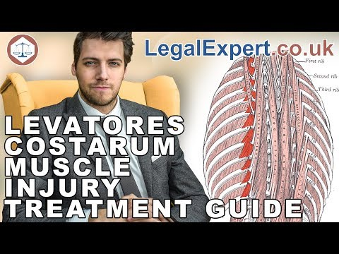 Levatores Costarum Muscle Injury Treatment Guide ( 2019 ) UK
